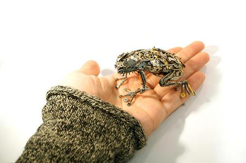 人気のカエルは手の平サイズ