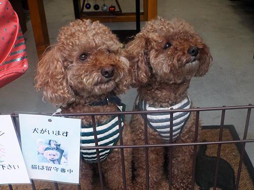 双子のチップとデール