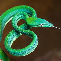 《皮革製品修復ラボ(35)》ヘビやダチョウやトカゲの革製品