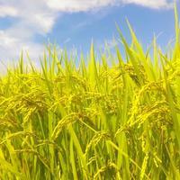 《News Flash》農業デイワークアプリリリース 超短期間マッチング