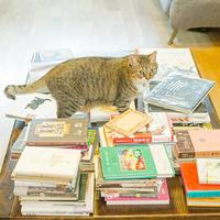 吾輩堂、日本で一番初めに開店した「猫本専門書店」