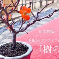ReBonsai、盆栽のサブスクサービス『樹の糸』開始